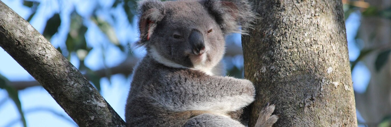 What animals can you see in Brisbane?