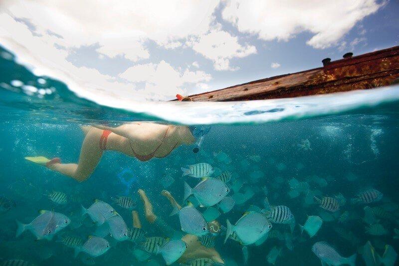 swimming with fish on moreton island