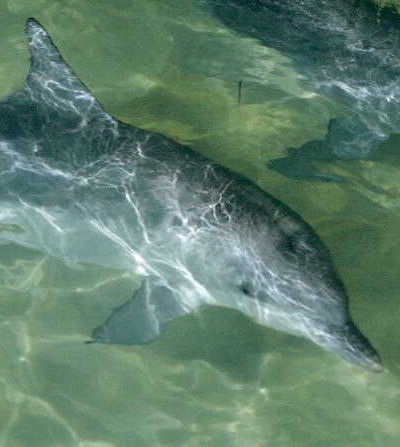 1 Day Moreton Island Cruise with Dolphin Viewing $159